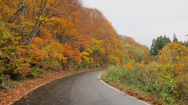 志津温泉付近紅葉